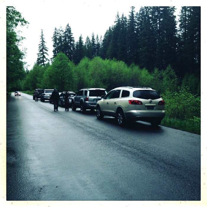 Our caravan of birdie peeps! Typical Northwest selection of Subarus, Hondas and Toyotas. Stampede Pass, WA.