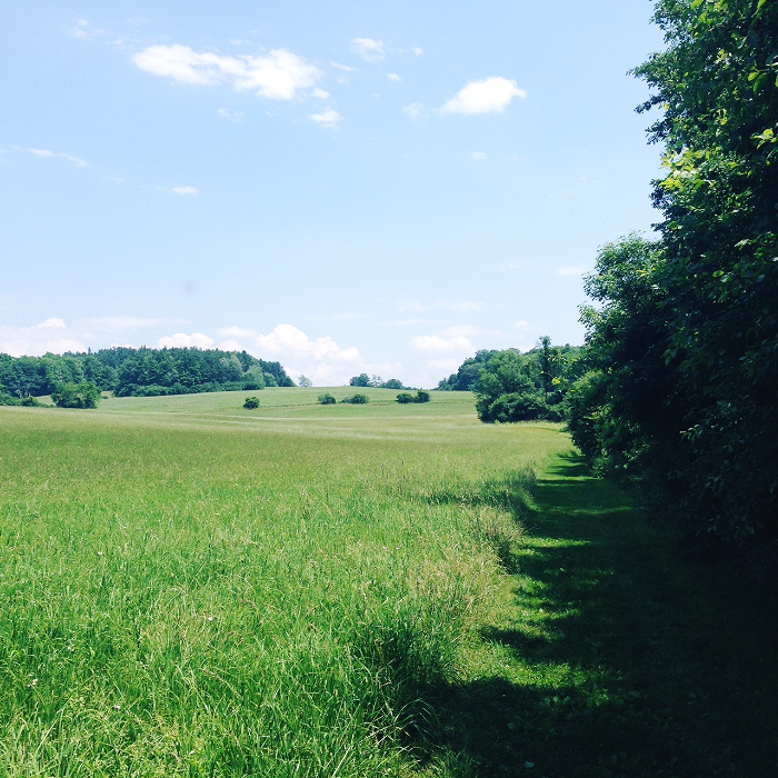 The Farm manages these fields to allow for ground nesting birds to succeed--no mowing!