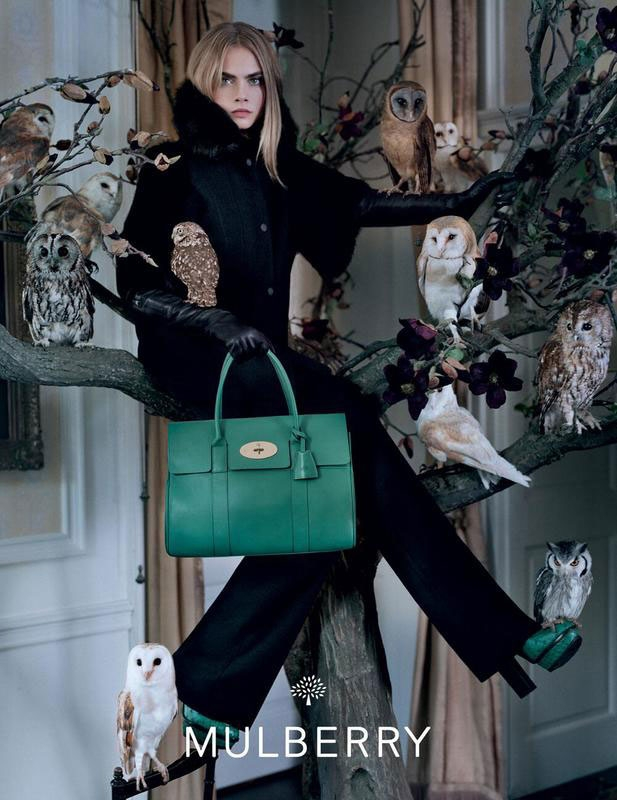 More Mulberry F/W 2013. Among the owls: Barn Owl, Ashy-faced Owl, Tawny Owl, White-faced Scops Owl, and Little Owl, . Image: Tim Walker