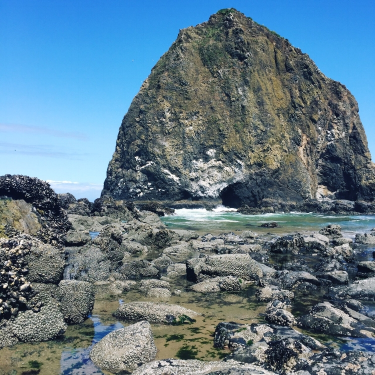 Haystack Rock in Cannon Beach, up the coast from Manzanita. The Rock is home to a Tufted puffin colony. The best time to see the birds is dawn or dusk as they leave their burrow-nests for a day at sea.