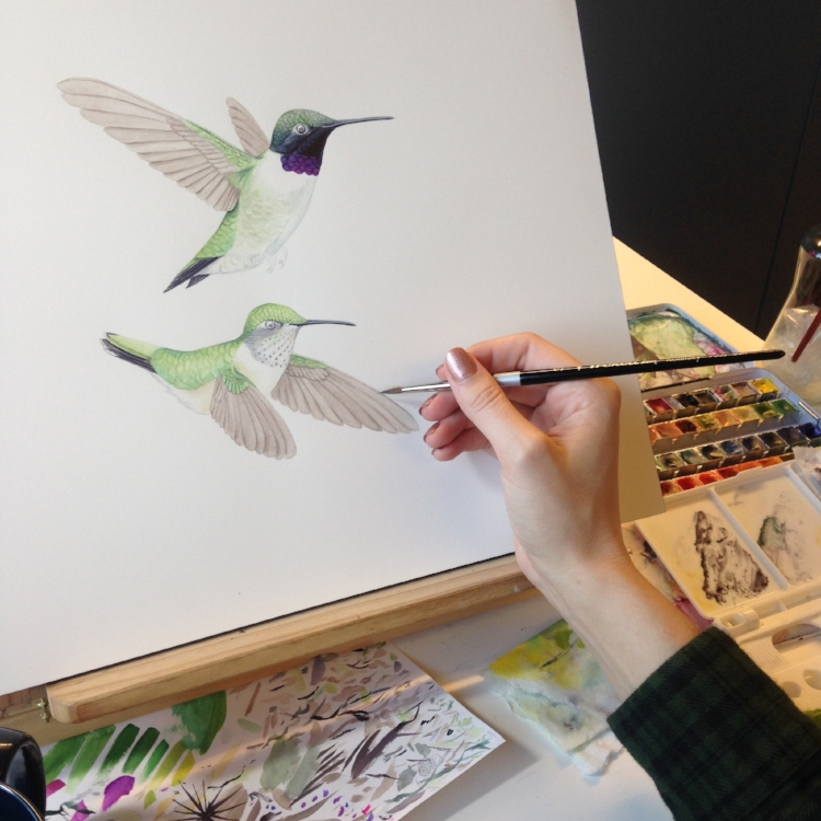 Progress on Black-chinned hummingbird. Image courtesy of the artist.