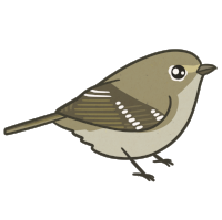 Hutton's Vireo, in case you're wondering!