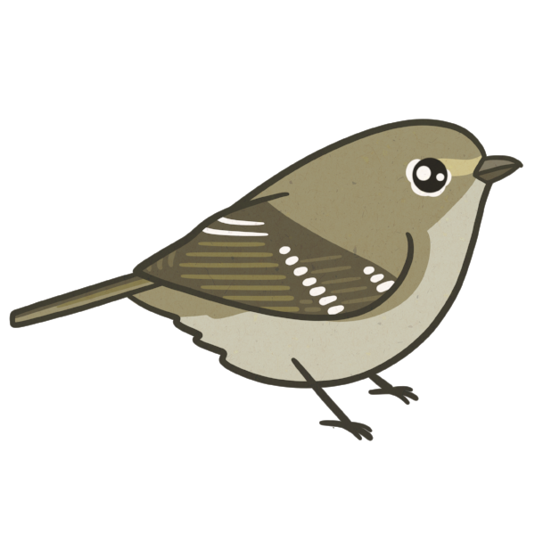 Hutton's Vireo by  Birds and Friends .