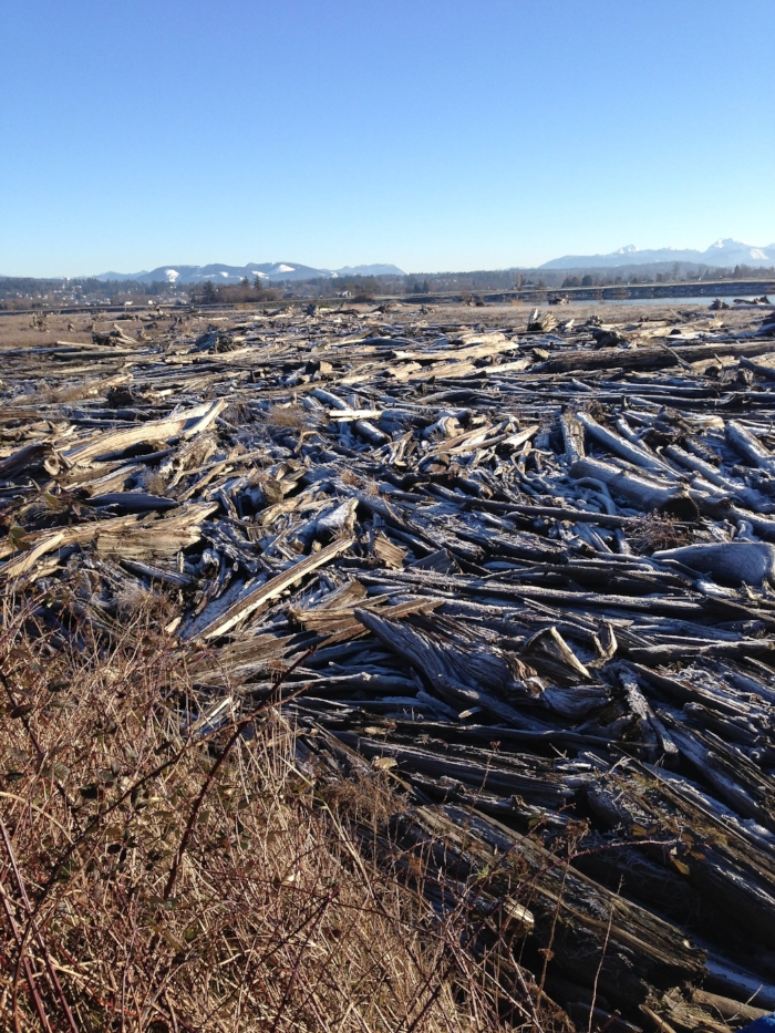 Gorgeous log flow at Eide Road, Stanwood. Cascade range in the distance.