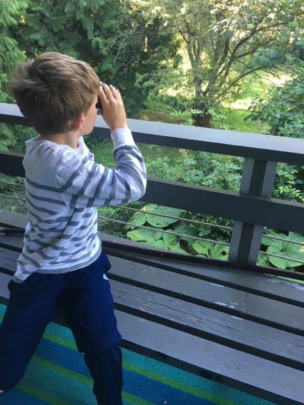 Son Vireo gamely posing for his mother, pretending to bird off our deck.