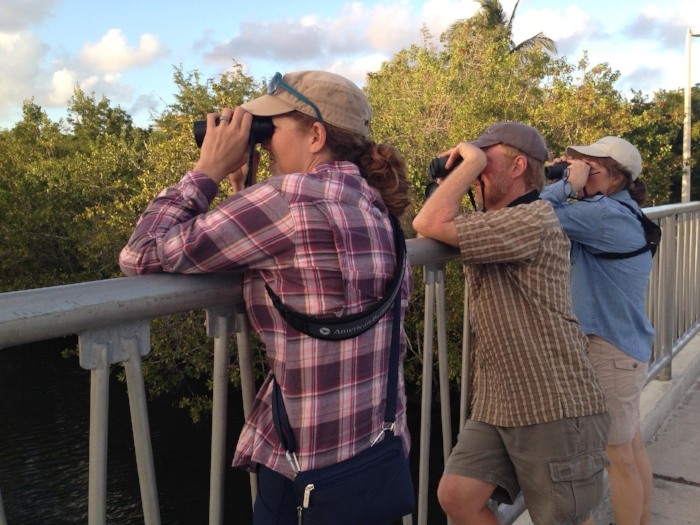 Looking at American Crocodile and West Indian Manatee on NIA's Miami Area Tour,  Miami, FL. Photo by Angel Abreu.
