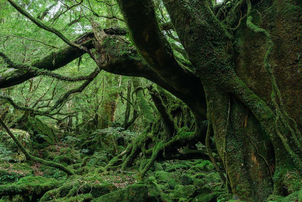Shiratani Unsuikyo Trail, the inspiration for the anime film Princess Mononoke