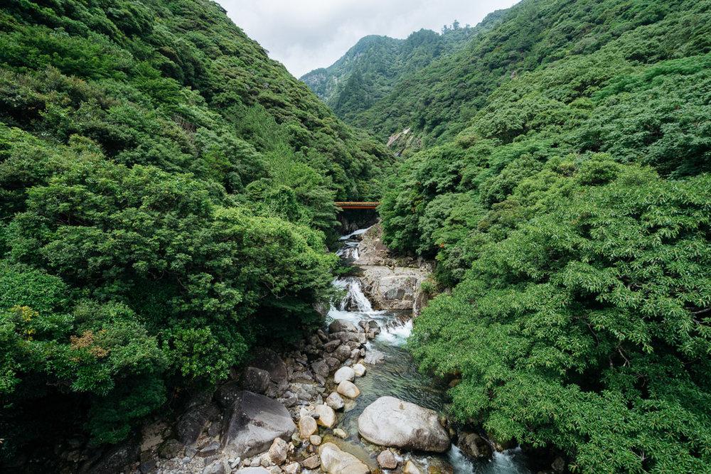 Forest Scenery, Yakushima Island, Japan