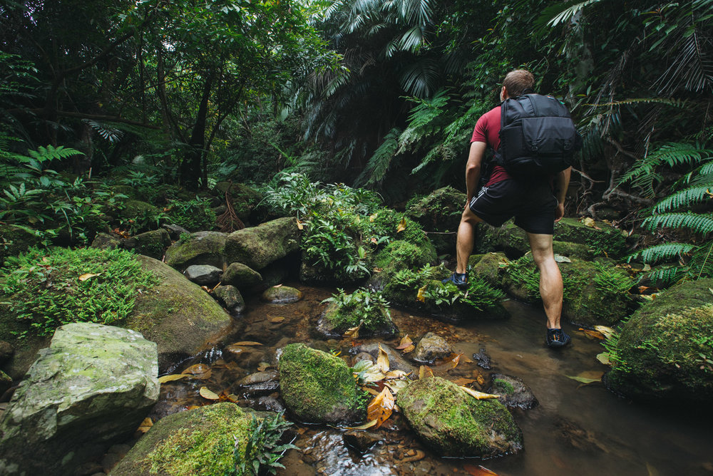 Stream trekking through the lush green Jungle of Iriomote Island, Okinawa, Japan.