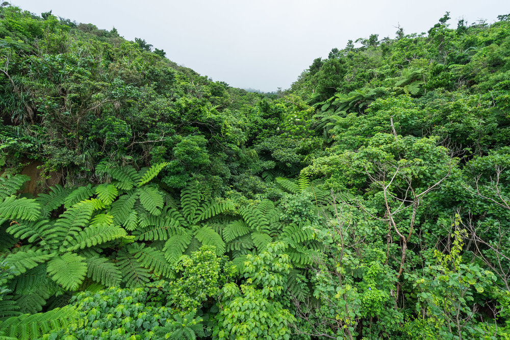 Lush Jungle Scenery