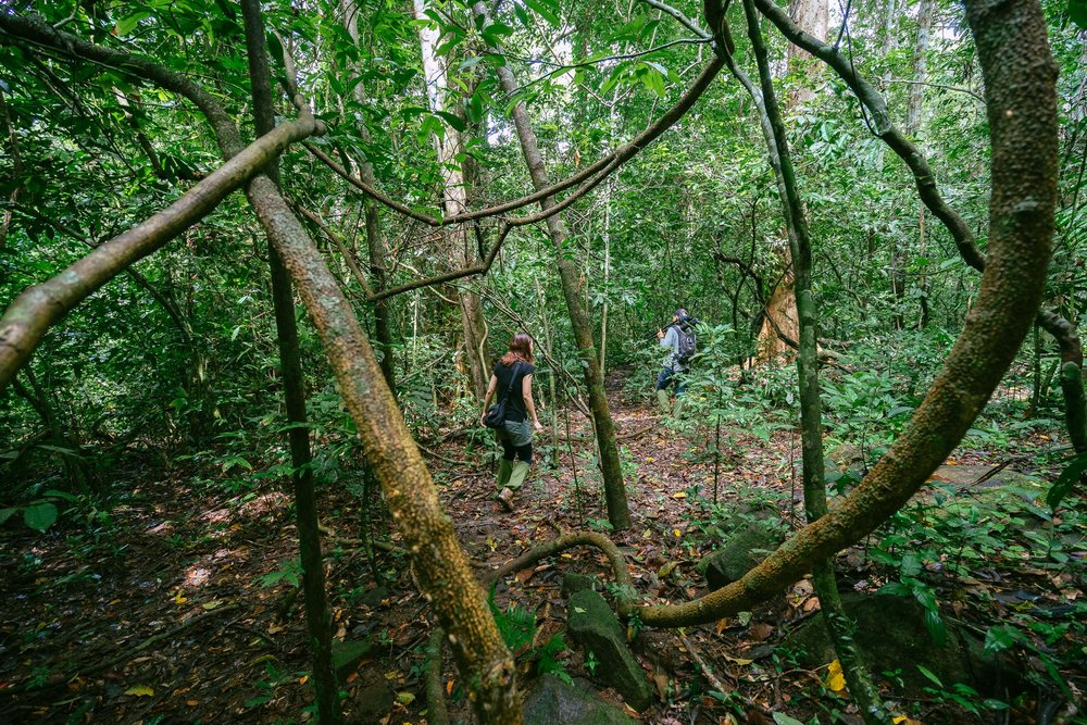 Searching for Gibbons, Khao Yai National Park, Thailand
