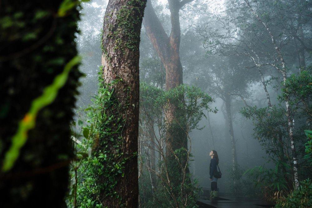 Khao Yai National Park Forest, Thailand