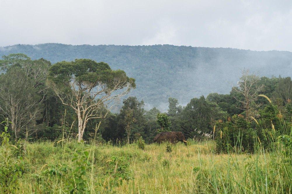 Spot the Wild Elephant