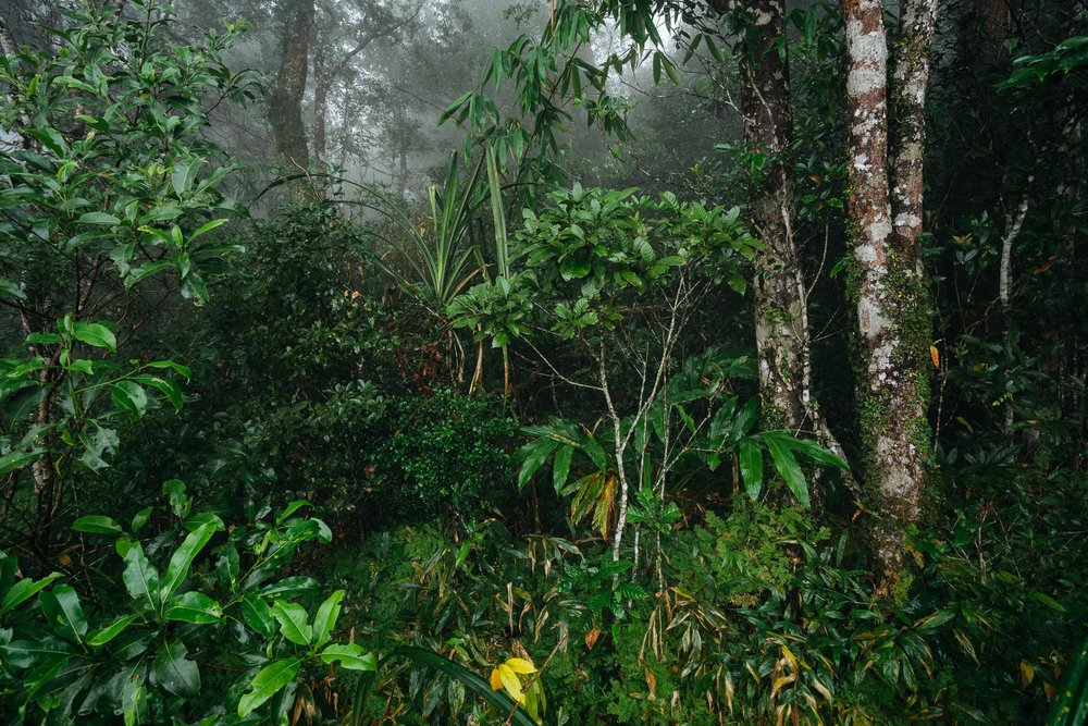 Lush Forest Scenery, Khao Yai National Park