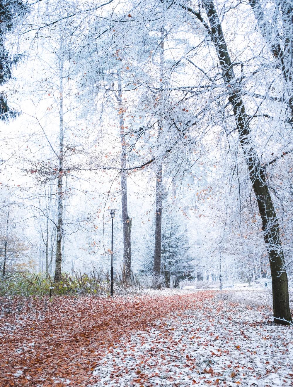 Naturfoto_Annelundsparken_max-norin-5-Redigera.jpg