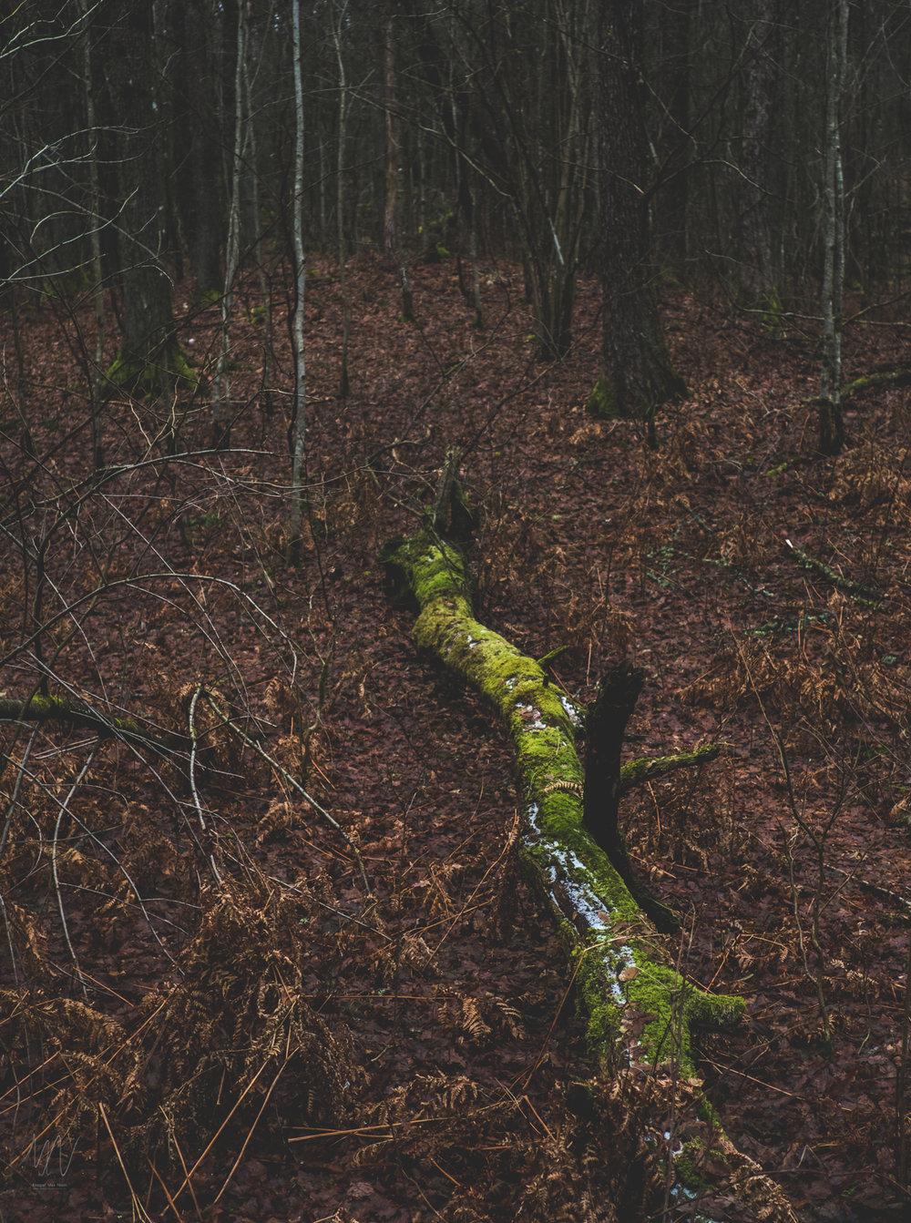 Fotograf-max-norin-fuji-x-naturfoto-1.jpg