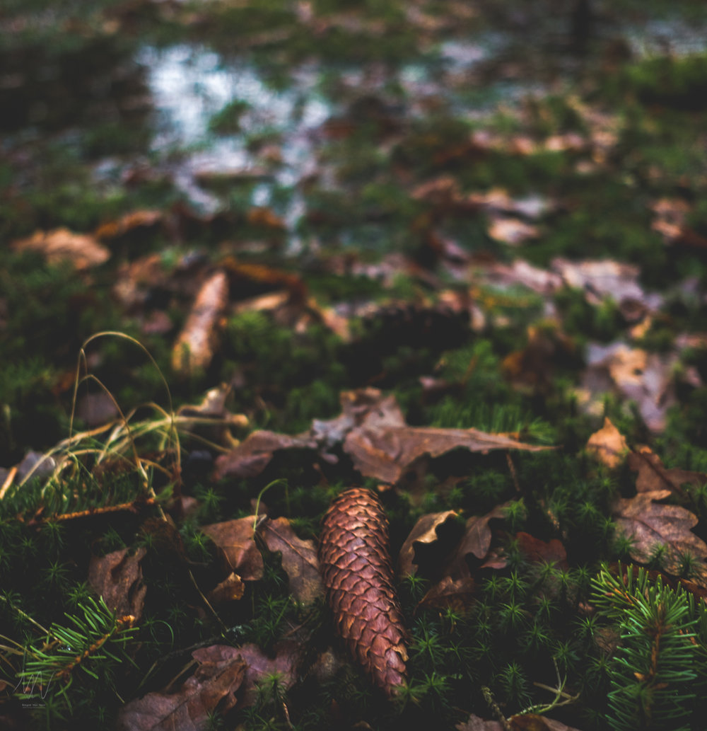 Fotograf-max-norin-fuji-x-naturfoto-4.jpg
