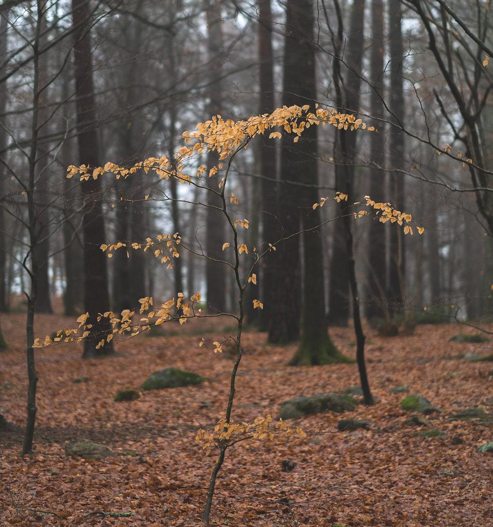 naturfoto-Fotograf-Max-Norin-2.jpg