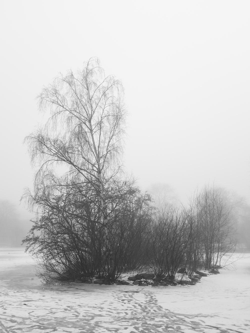 Winterfog-2692.jpg