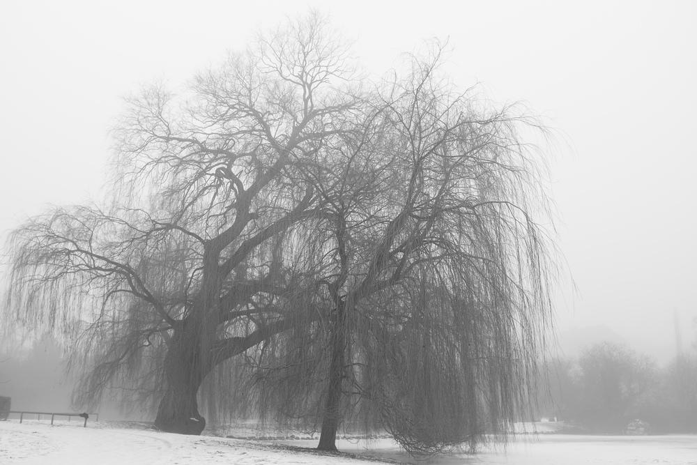 Winterfog-2710.jpg