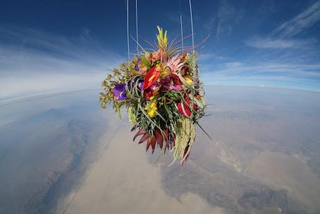 Web_flower00.jpg