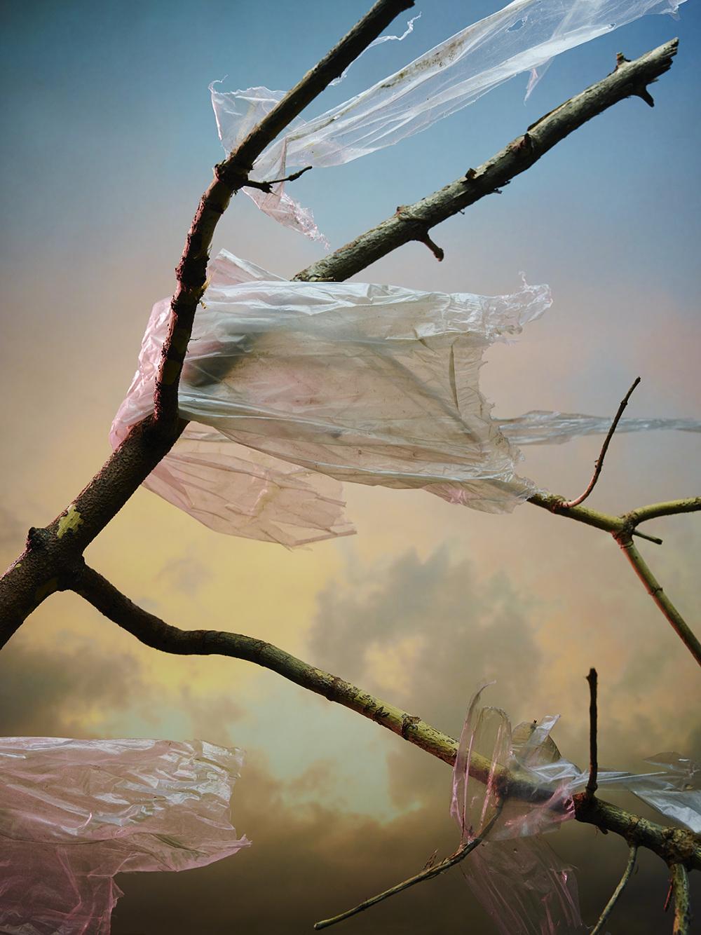 2016-06-15_5761a1c725bde_Plastic-Plastic-Trees_FINAL-Web_1000.jpg
