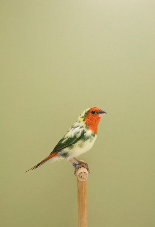 BIRD-8.jpg