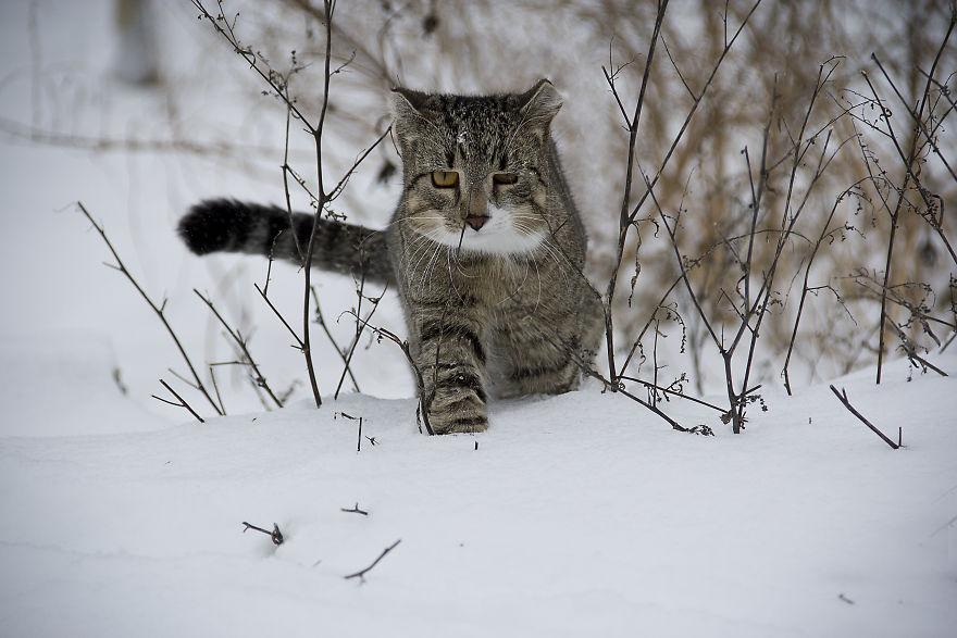 cat-188088-5879e7ff56ff1__880.jpg