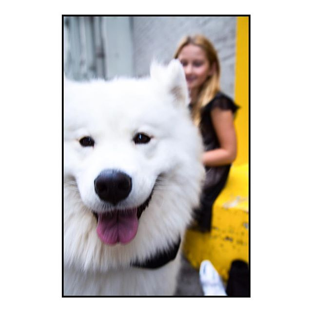 A random canine photobomb