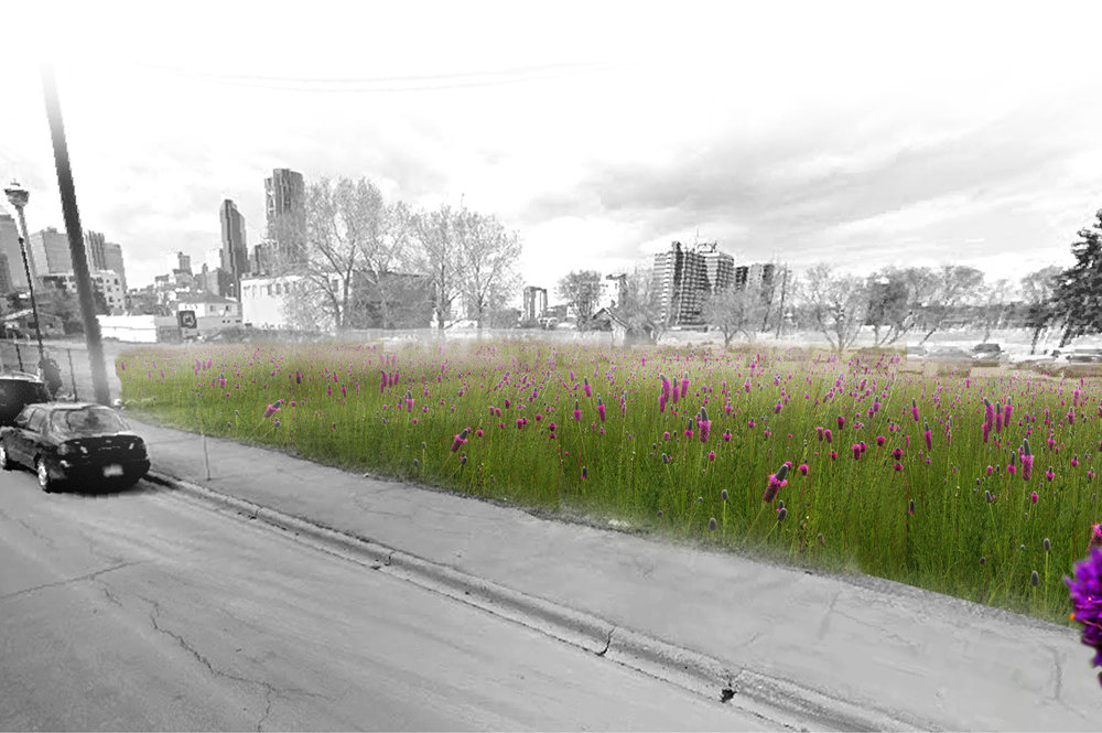 An urban landscape proposal exploring the restoration of native prairie planting in forgotten spaces throughout the city of Calgary, Alberta  Winner of the Field Prize for Transportation  D Talks Lost Spaces Competition  Completed in collaboration with Judit Urgelles