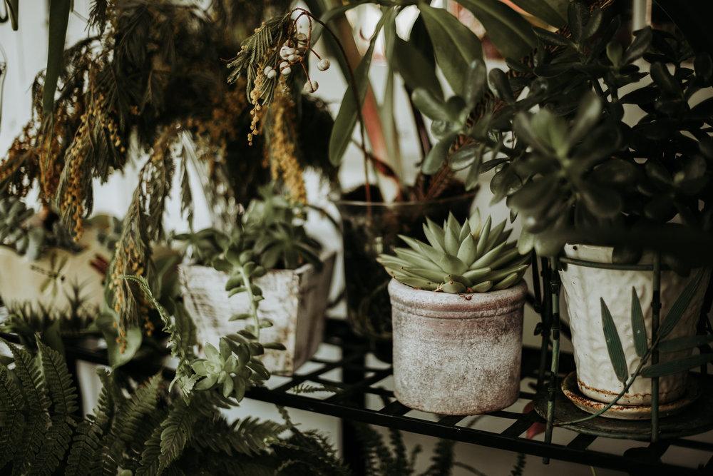 kaktus+bröllopsinspiration