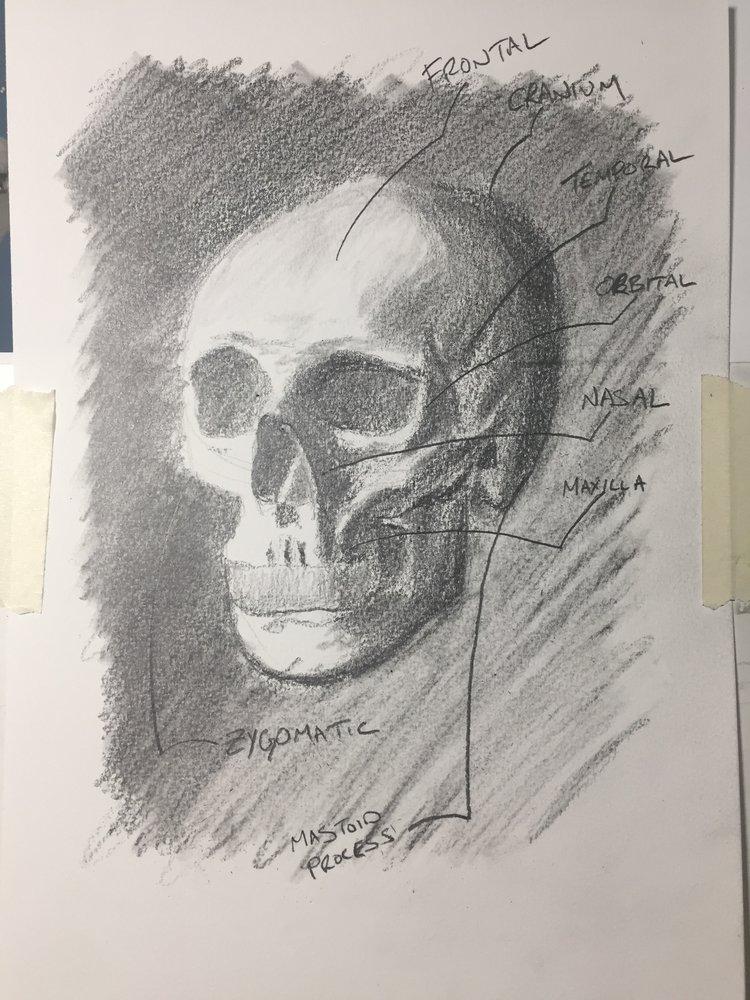 Anatomy Lessons Skull Travis Sennett