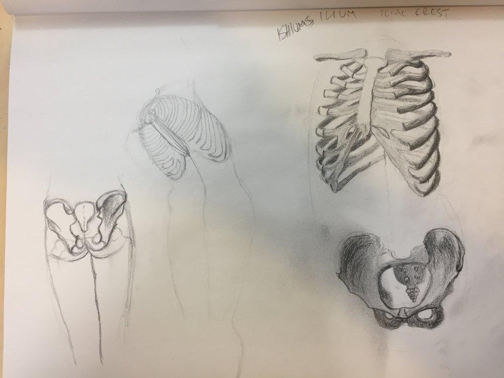 Torso lesson - rib cage and pelvis