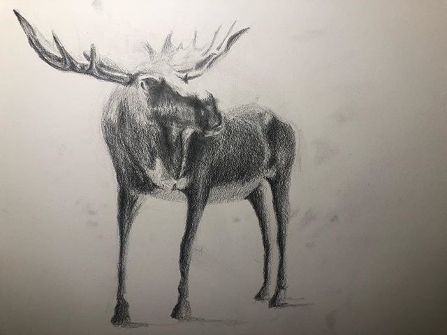 Moose. Mooses. Meece. I've never seen a moose in person but I sure would like to one day. I've seen signs saying their nearby! That's not good enough... . . . . . #moose #moosedrawing #drawing #sketchbook #art #artwork #visuallibrary #pencildrawing #wildlifeart #mooseart