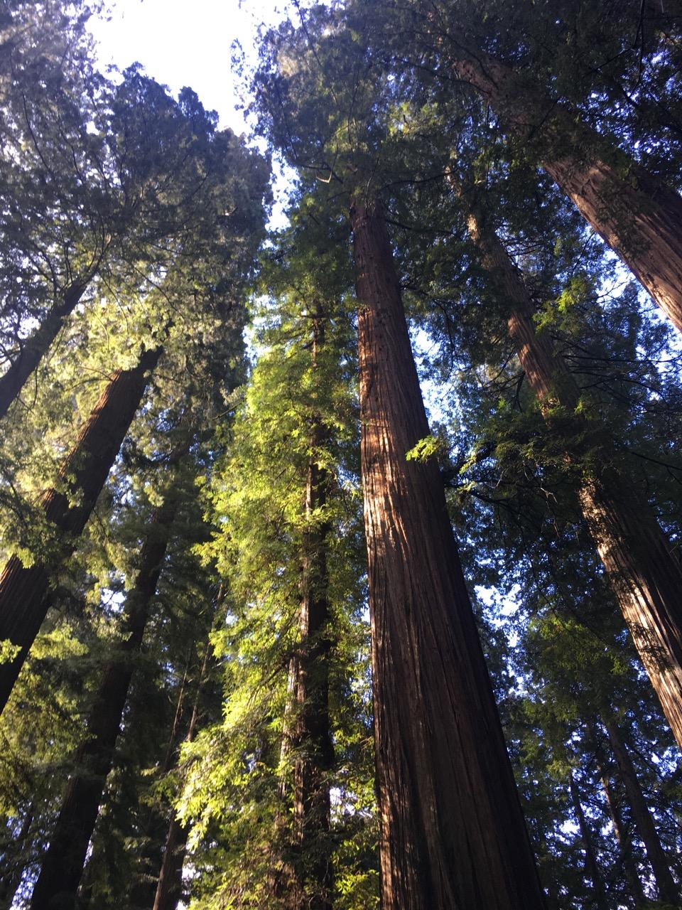 wild redwoods retreat ca