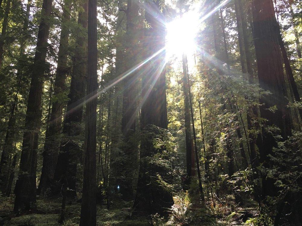 wild redwoods retreat