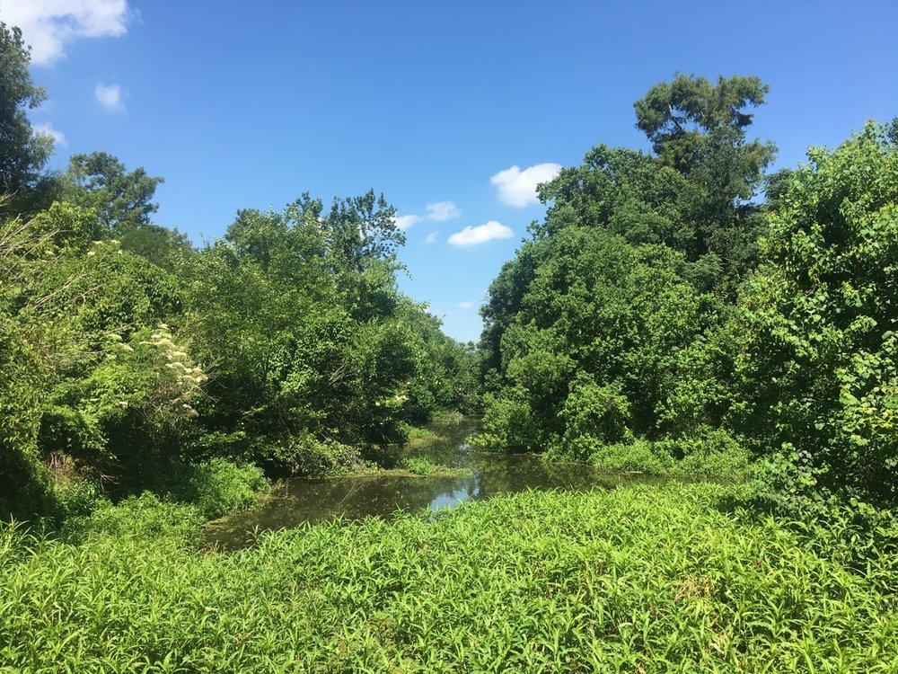 woodlands conservancy wetlands