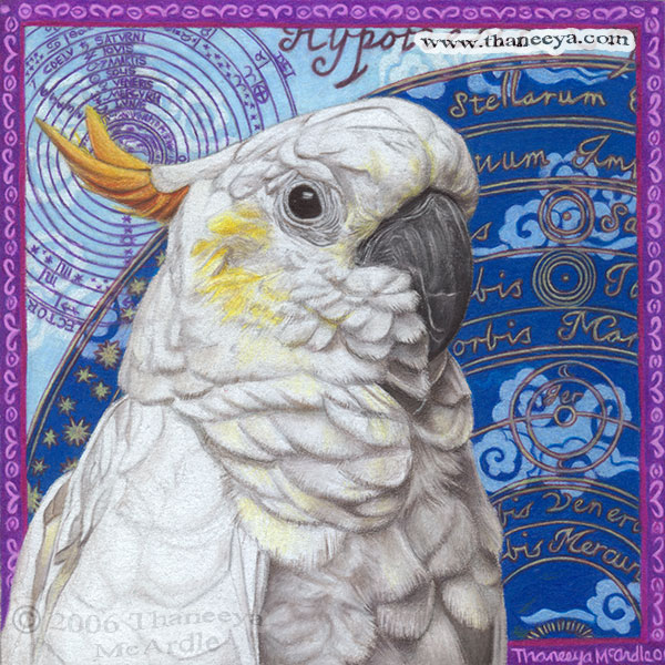 Cockatoo Drawing Colored Pencil by Thaneeya