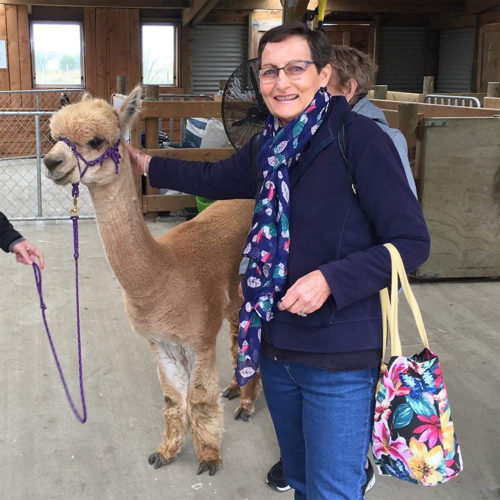 Meeting an alpaca at Shamarra Alpaca Farm in Akaroa, New Zealand