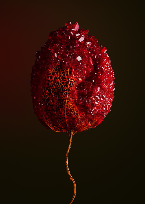 HOST - Carnelian par Alyson Mowat