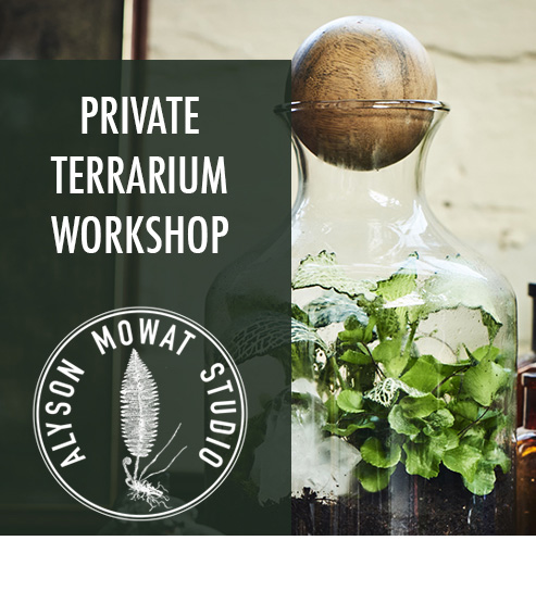 Copy of Copy of Private Terrarium Class