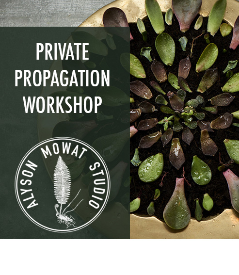 Copy of Copy of Private Propagation Workshop
