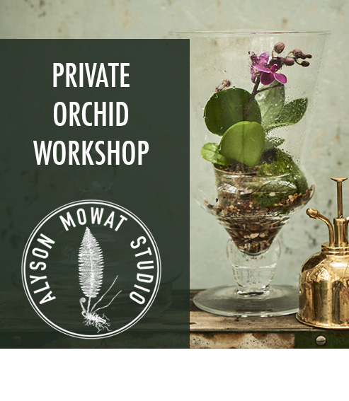 Copy of Copy of Private Orchid Workshop