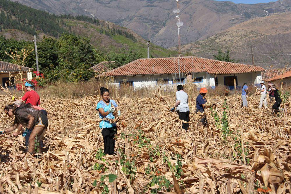 Corn Farmers.jpg