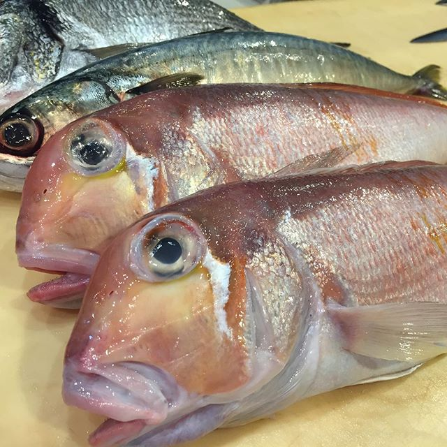 #amadai #saba #kurodai #umisushiroseville #japanesefish #tsukijifishmarket #nofilter
