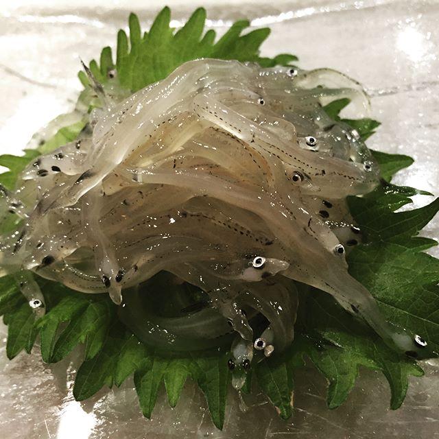 #shirauo #icefish  #shirako #codmilt  #umisushiroseville  #tsukijifishmarket  #nofilter  #omakase  #sakebomb  #roseville  #sushi  #iamasushichef  #again