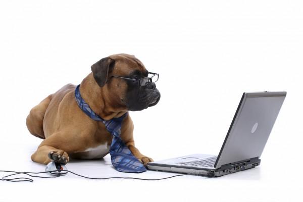 Boxer-Dog-at-Computer-e1433500671661.jpg