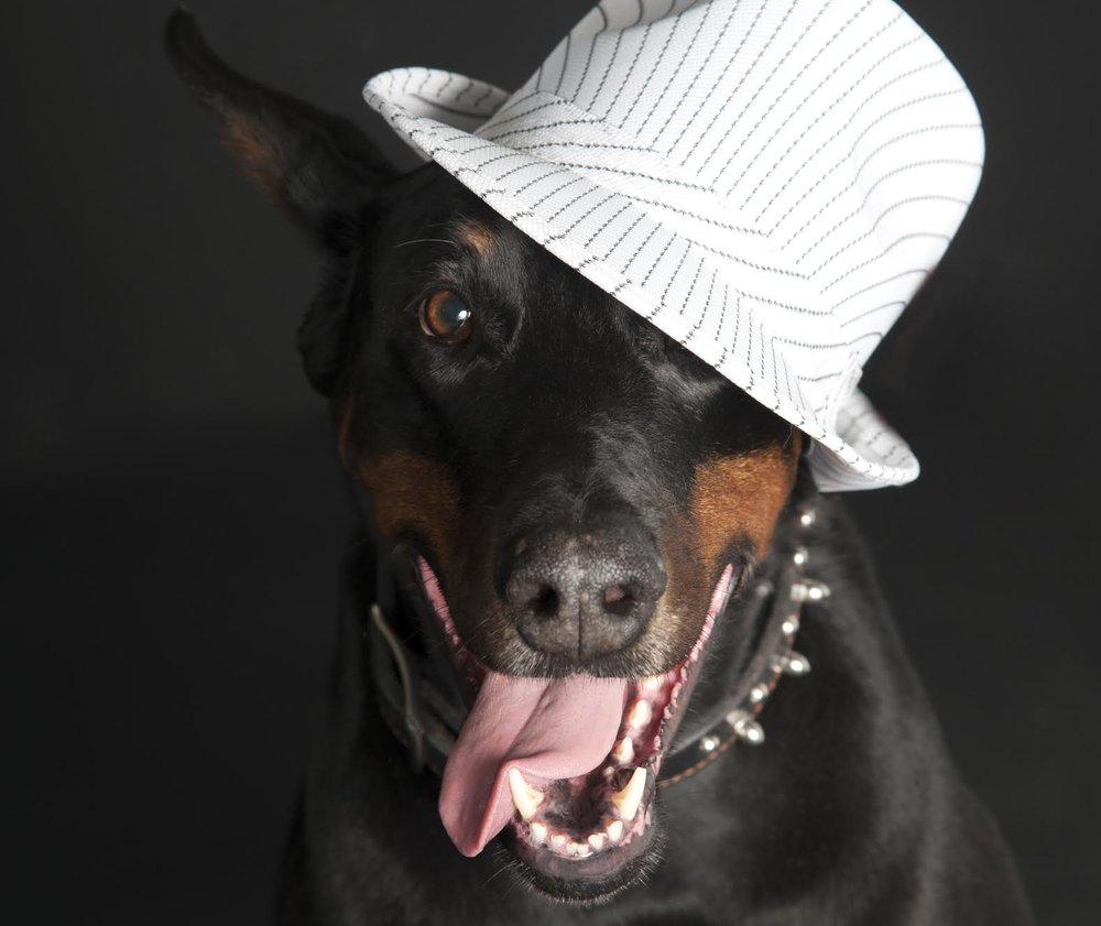 Di Ravallese Dobermans - V for Vendetta - AKA 'LEXX LUTHOR' RIP 2007 - 2016*The INSPIRATION for Woofapalooza & Dogs of Vaughan*