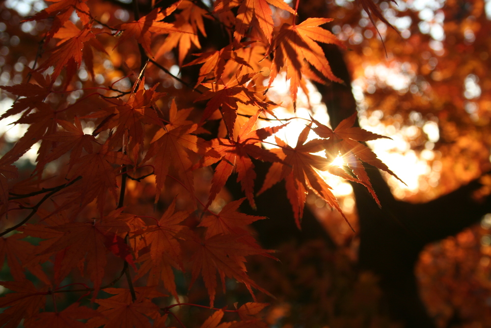 japan2007.3.jpg