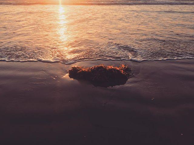 #natureza #sun #summer #nature #beach #praia #mar #love #family #amor #friends #brazil #sunset #sunrise #snapstagram  #tonoadorofarm #art #love #sol #sandiego #surf #colors #photooftheday  #gopro #ny #nyc #fashion #smile #amazing #brooklyn #california